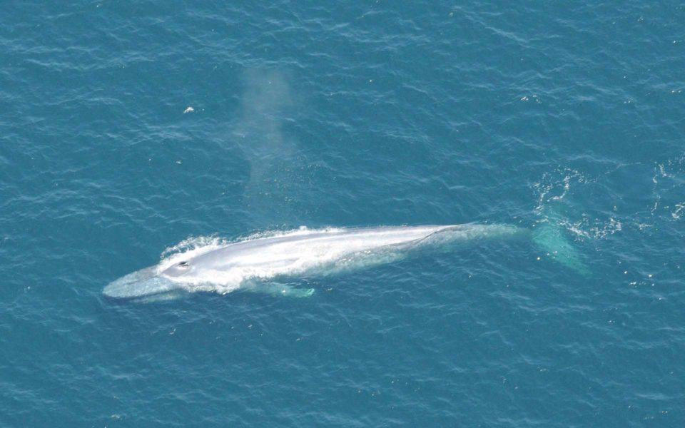 Chaussures Le cœur d'une baleine écouté pour la première fois