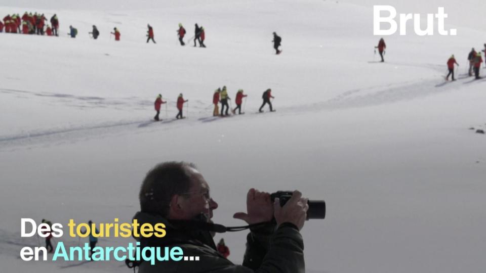 Maillot de bain VIDEO. Selfies avec des manchots, baignades dans l'eau glaciale… Le tourisme, nouvelle menace pour l'Antarctique