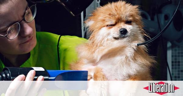 Maillot de bain Spa canin : «Ça fait plaisir à la maîtresse, et la chienne s'en fiche»