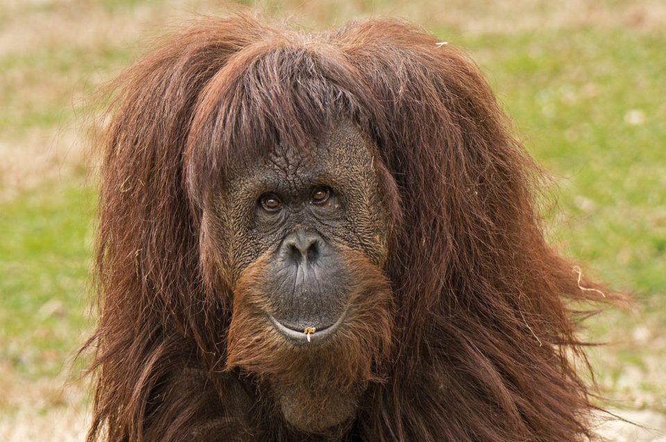 Animaux Les humains préfèrent sauver les espèces qui leur ressemblent