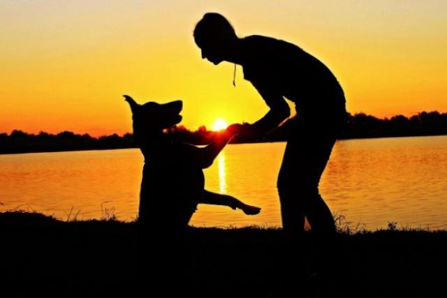 Chaussures de sport Coaching – Le canicross : faire du cardio avec son chien en France et ailleurs