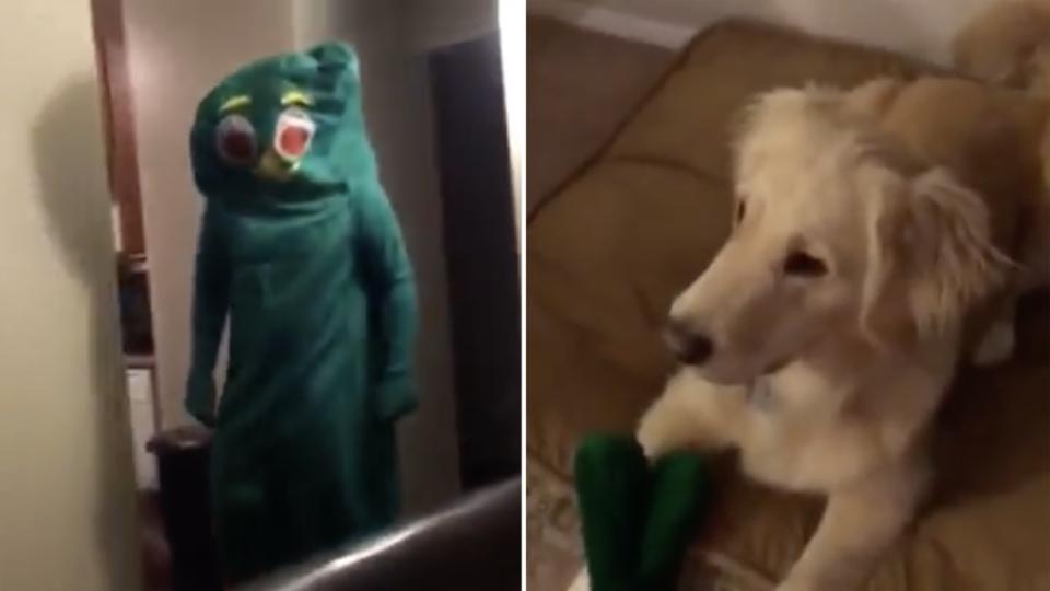 Jouet Un internaute surprend son chien en enfilant un déguisement géant de son jouet favoris
