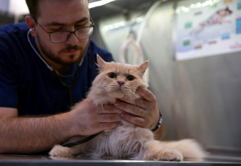 Jouets En Jordanie, finie la vie de chien pour certains animaux de compagnie