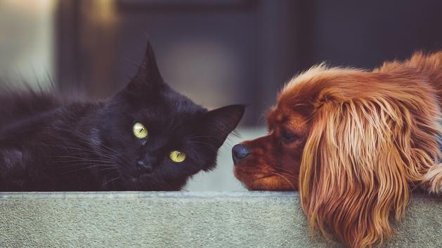Animaux Seul un amoureux des animaux obtiendra un 10/10 à ce take a look at de français