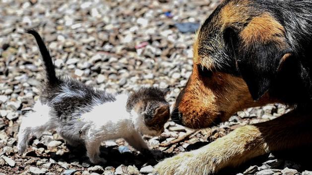 Animaux Numéro vert, défenseur des droits… Les idées de l'Assemblée nationale pour améliorer la situation animale